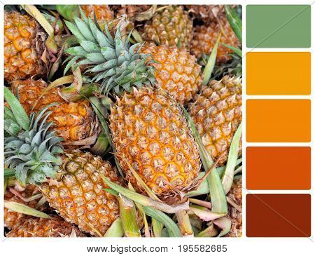 Pineapple Texture With Palette Color Swatches