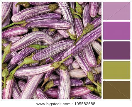 Fresh Vegetable Eggplant With Palette Color Swatches