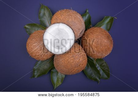 Close-up of organic and brown coconuts with bright green leaves on a dark purple background, top view. Exotic nuts. Summer fruits. Top view of tropical fruit coconuts. Fresh cocos.