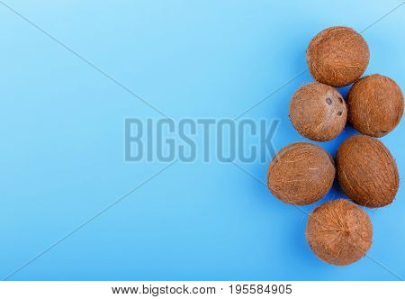 A bunch of fresh coconuts on a bright blue background. Whole and organic coconuts on the left side. Top view of natural tropical fruit of coconuts. Exotic nuts on a blue background.