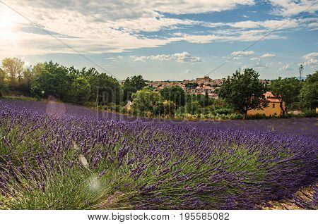 View of lavender fields under sunny blue sky and the town of Valensole in the background. Located in the Alpes-de-Haute-Provence department, Provence region, in southeastern France. Retouched photo