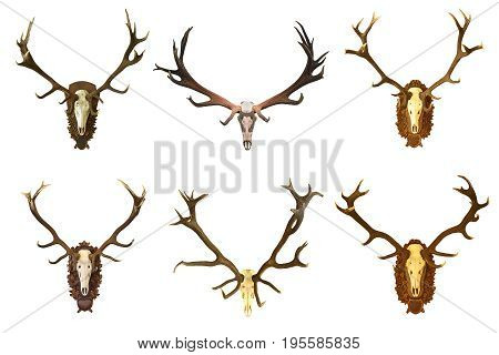 collection of huge red deer buck hunting trophies isolated over white background game animals ready for your design ( Cervus elaphus )