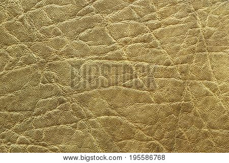detailed african elephant pelt texture animal real leather