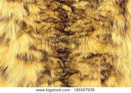 snow leopard textured pelt real animal leather ( Panthera uncia )