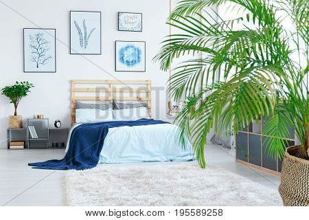 View of modern bright stylish bedroom with blue blanket and flower posters