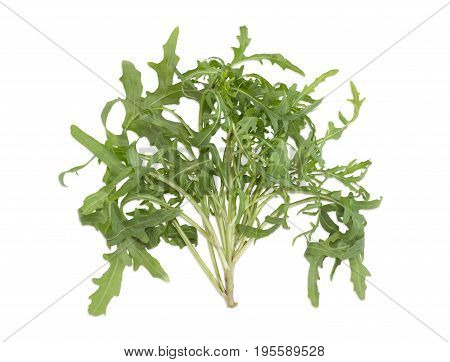 Stem of the fresh arugula with several twigs and leaves on a light background