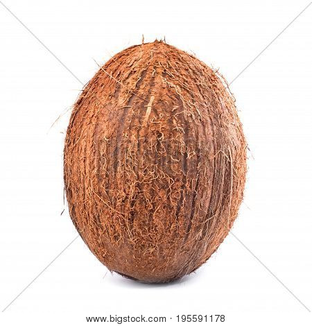 A whole single oval coconut with clipping path isolated on a bright white background. Raw and ripe appetizing hawaiian nut. Hairy coconuts. Organic vegetarian ingredients.