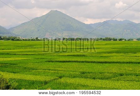 Beautiful Rice Field In Northern Vietnam