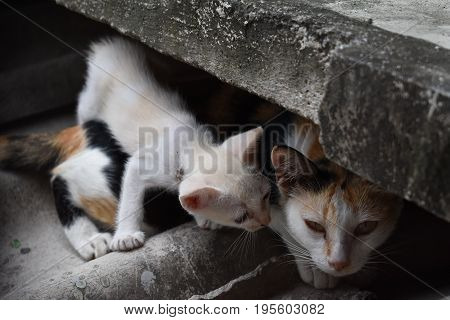Cat mother and white kitten dodge under the eaves