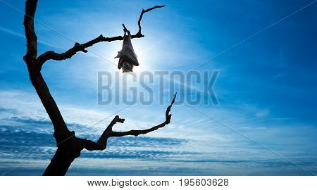 Halloween background with flying bat over bright sky