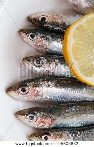 Detail of fresh sardines