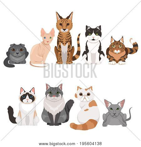 Vector illustrations set of many different kittens. Cats characters in cartoon style. Cartoon cats animal, collection of feline breed