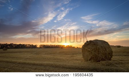 Scene with hay rolls on meadow.Beautiful landscape. Agricultural field. Round bundles of dry grass in the field against the blue sky. Bales of hay to feed cattle in winter