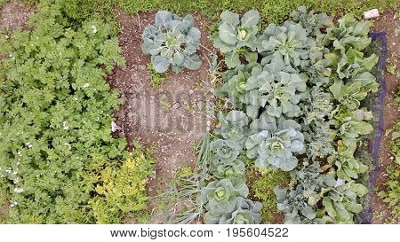 Aerial photo above home grown garden vegetable patch