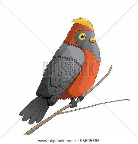 Funny cartoon bird character illustration, vector, EPS10