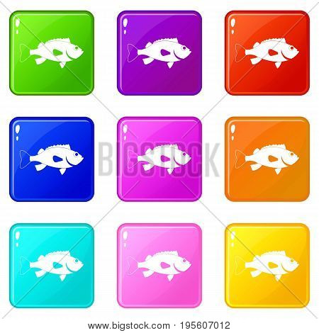 Sea bass fish icons of 9 color set isolated vector illustration