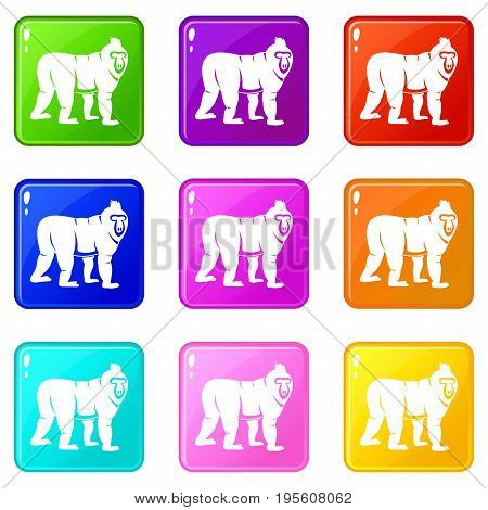 Mandrill monkey icons of 9 color set isolated vector illustration