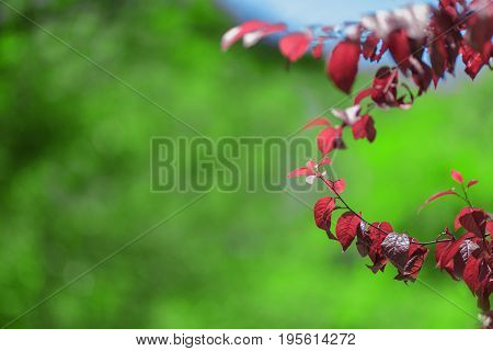 A couple of amazing colorful branches with red foliage on a bright green background. Catching floral summer view. A concept of a spectacular environment. Saving environment.