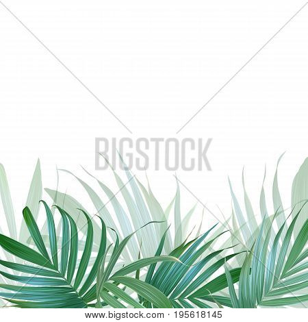 Vector palm leaves background. Tropical banner. Stylish poster with exotic plants. Hawaiian design. Botanical composition. Card with banana leaf. Floral frame.