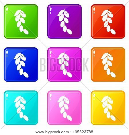 Branch of cornel or dogwood berries icons of 9 color set isolated vector illustration