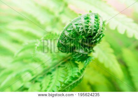 Fern leaves, green leaf. Macro photo in garden