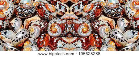 Close up of beautiful sea shells in sunlight