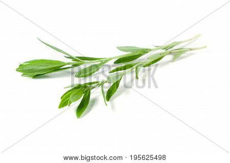 Sprig of fresh thyme isolated on a white background.
