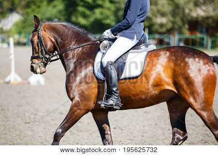 Close up image of horse with rider at dressage equestrian sports competitions. Details of equestrian equipment
