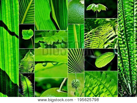 Collage of different green leafs and plants