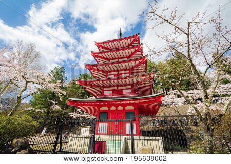 Red pagoda in cherry blossom sakura in spring season Fujiyoshida Japan.