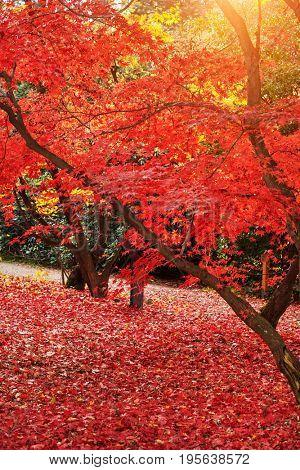 Beautiful Colorful Autumn landscape. wonderful picturesque scene.