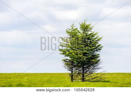 Single Tree Stand Alone In Landscape Of Hautes Fagnes National Park Near Aachen At Eifel And Ardenne