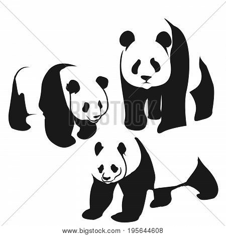 Panda bear illustration curious panda wildlife and panda bear vector character. Wildlife zoo asia panda bear and panda bear endangered species fat giant. Park zoology forest panda animal.