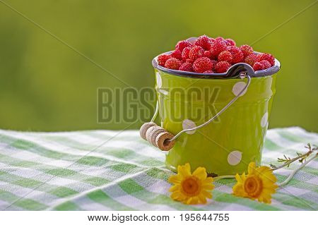 A small bucket of wild strawberries. Bucket green, filled with berries of red on a green blurred background. Colorful summer picture in red and green tones.