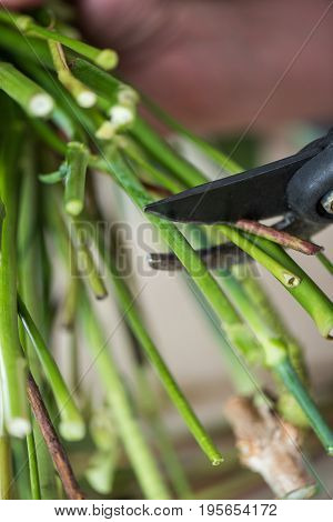 Close-up Partial View Of Florist Cutting Green Stems With Secateurs