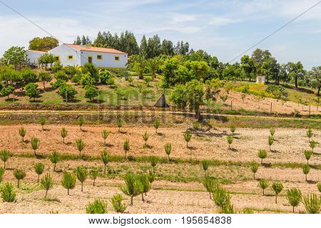 Farm House And Trees In Vale Seco, Santiago Do Cacem
