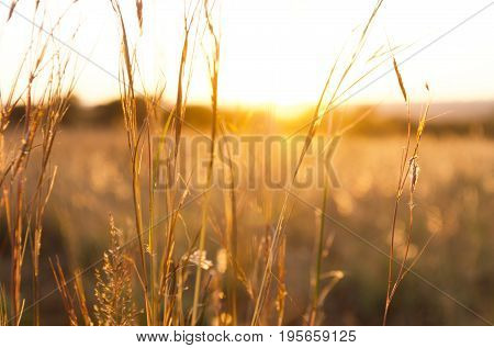 Sunlight shining through dry grassy field with some green grass