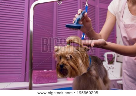Cropped Shot Of Groomer Holding Comb While Grooming Dog In Pet Salon