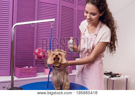 Smiling Professional Groomer Holding Lotion And Moisturising Cute Small Dog In Pet Salon