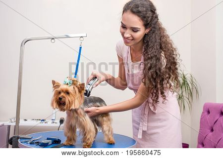 Smiling Young Groomer In Apron Trimming Cute Furry Dog In Pet Salon