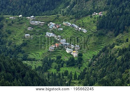 Ariel View of Small Himalayan Town midst Cedar and Pine Trees