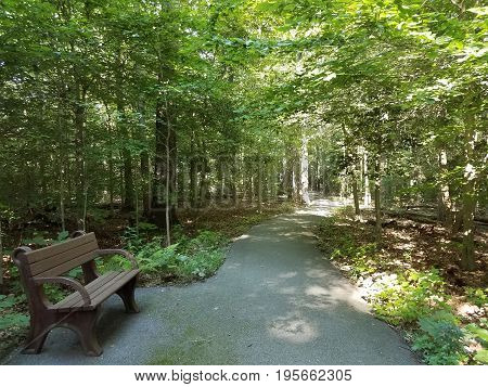 brown bench and black asphalt trail in the woods