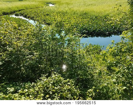 wetland area with stream and many green plants