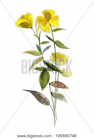 Yellow watercolor flower on white background. Original Hand drawn illustration.