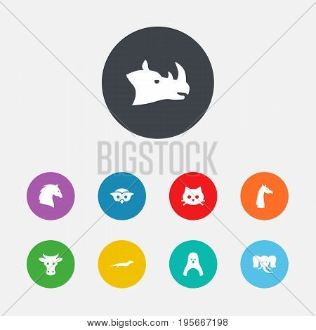 Set Of 9 Zoology Icons Set.Collection Of Kine, Gecko, Rhinoceros And Other Elements.