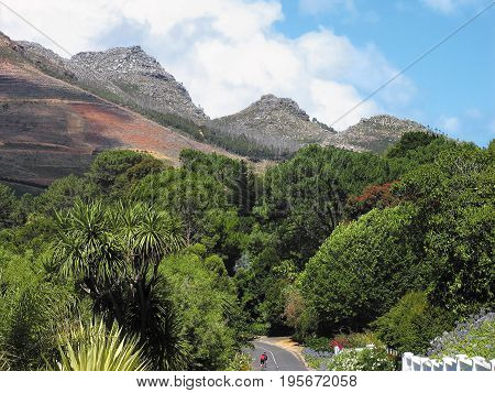 FROM CONSTANTIA, CAPE TOWN, SOUTH AFRICA, TREES AND VEGETATION GROWING IN THE FORE GROUND AND  MOUNTAINS IN THE BACK GROUND