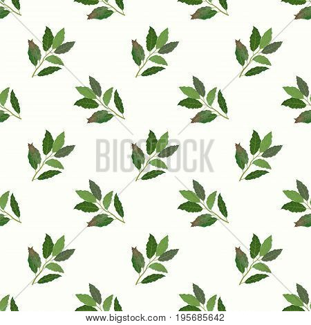 Seamless Background Image Colorful Watercolor Texture Vegetable Food Ingredient Bay Leaf