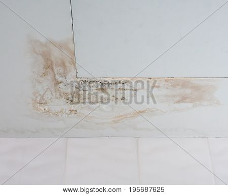 Water stain with the fungus on the ceiling board near the service vent in the public toilet.