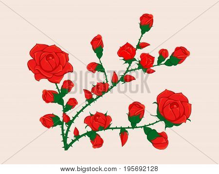 The branch of roses dotted with small and big buds of red roses without leaves. For ornament greetings and decorations.