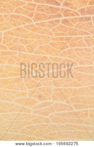 Abstract cracked pattern on dry plastic surface texture.Cracking plastic surface material